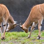 自然の世界は「弱肉強食」ではない!